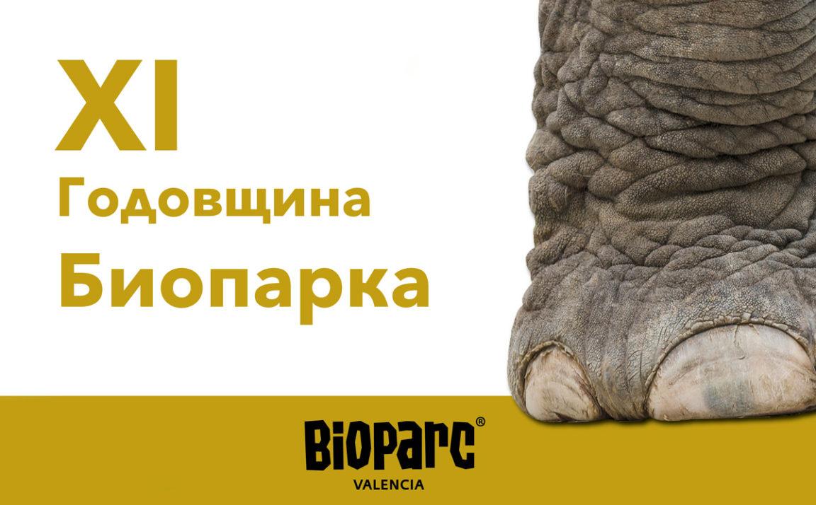 XI годовщина Биопарка и его «следы» в жизни Валенсии