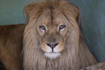 Лубанго – новый житель Биопарка